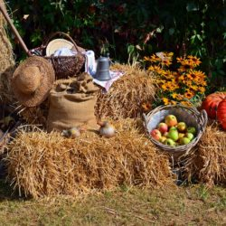 harvest-1642294_1920